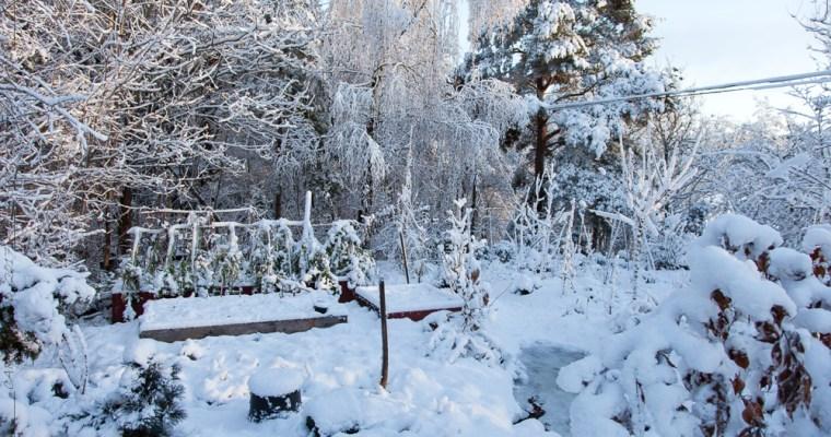 månadsbild November – en vit värld breder ut sig