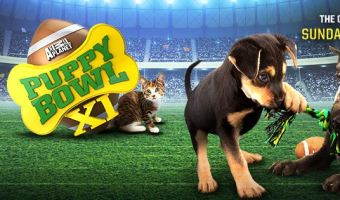 Animal Planet's Puppy Bowl XI – 2015