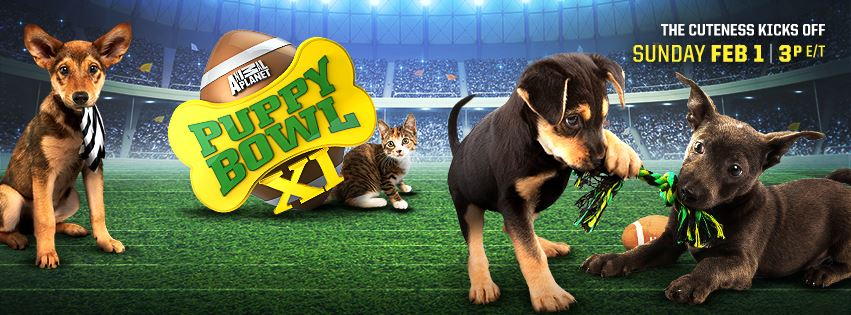@4TheLoveOfFam Animal Planet's Puppy Bowl XI - 2015