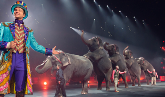 Don't Miss Your Chance To Say Goodbye To The Elephants!