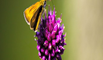 Tips For Creating A Garden That Attracts Butterflies