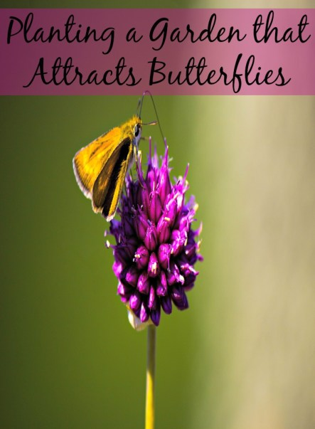 Planting a Garden that Attracts Butterflies