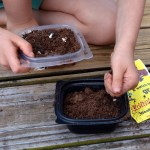Kids' DIY: Disposable Food Container Garden