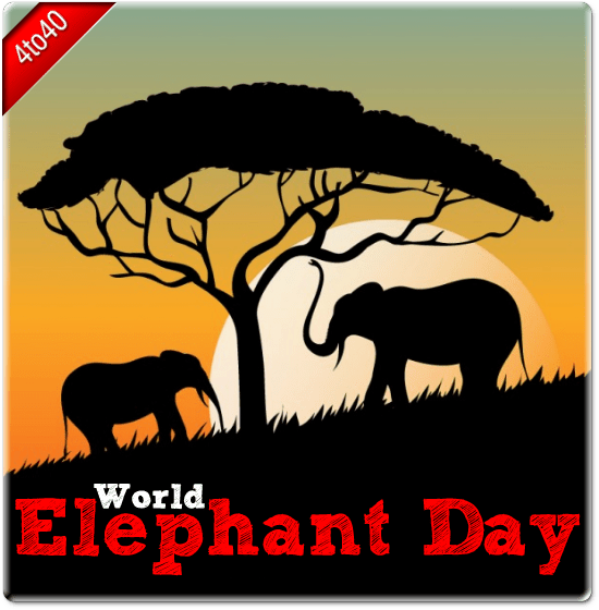 """International women's day """"in the future, there will be no female leaders. World Elephant Day - 12th August - Greeting Card - Kids ..."""