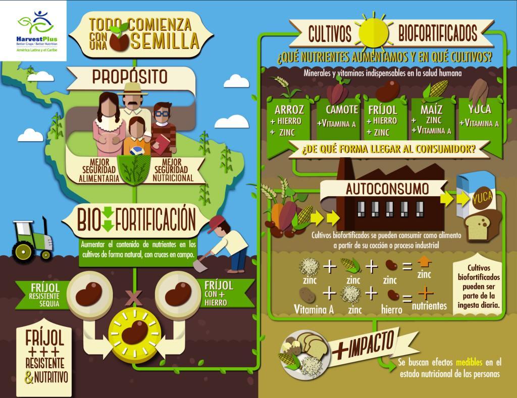 La fortificación y la biofortificación incrementan los nutrientes de los alimentos