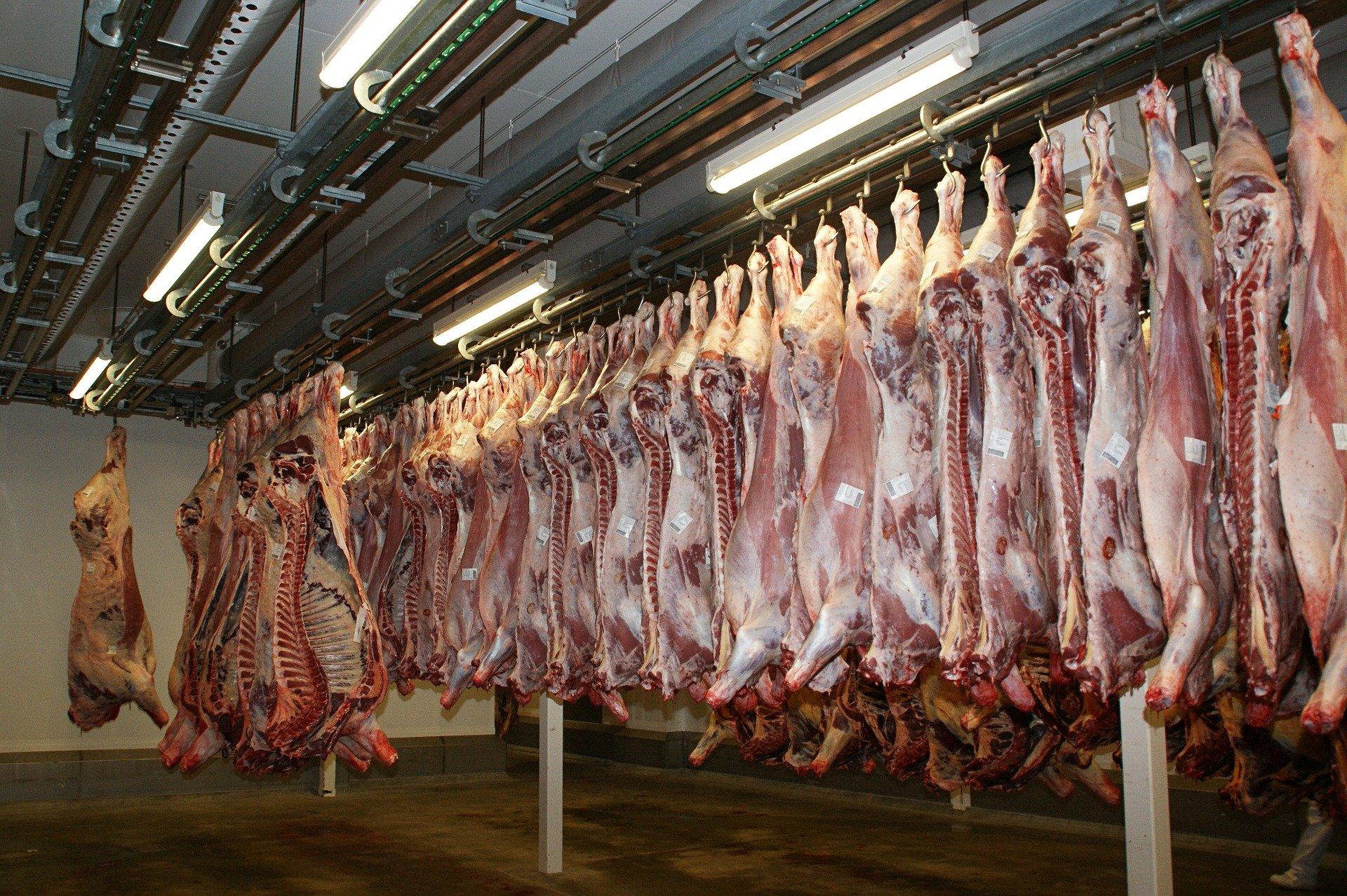 Matar animales para consumirlos es un acto de crueldad