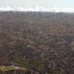 ¿Puede la población aprovechar los árboles tumbados por los huracanes Eta e Iota?