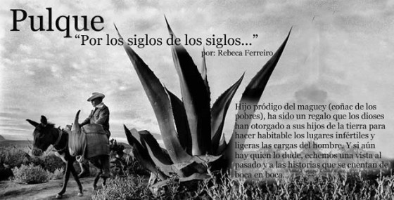 MAGUEY PULQUE