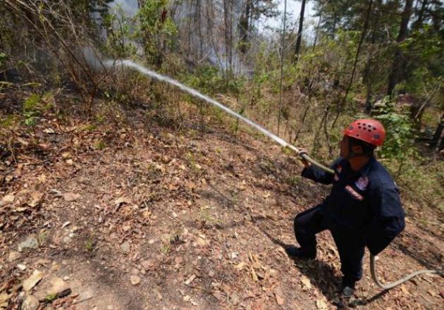 La política oficial de apagar los incendios forestales en Baja Califfornia y el resto de México, pone en riesgo la estabilidad ambiental de los bosques (Foto: Internet).