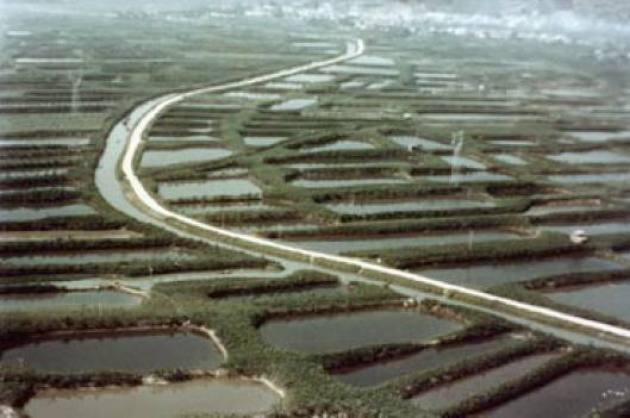 Campos de producción artificial de peces en China (Foto: internet).