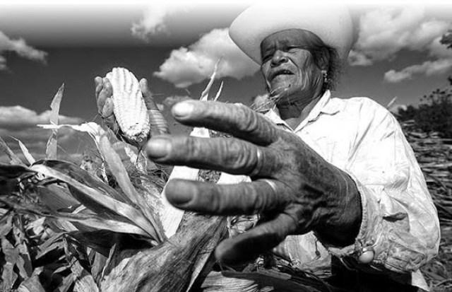campesino-manos