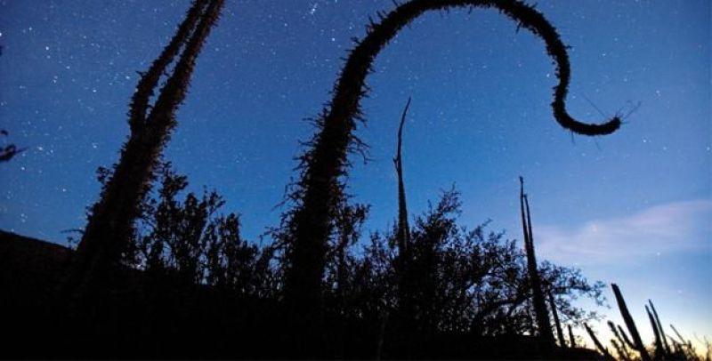 escenarios-naturales-mexico-valle-cirios-baja-california-sur-feb13