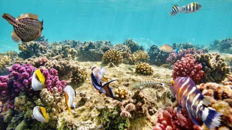 gran-barrera-coral-asutralia