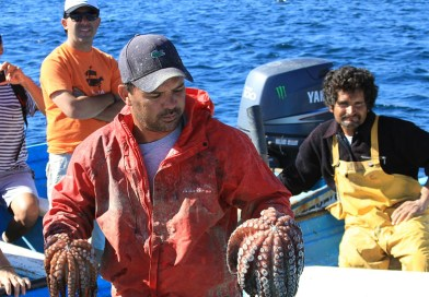 La pesca de pulpo en Bahía de Los Ángeles, en veda y se ordena