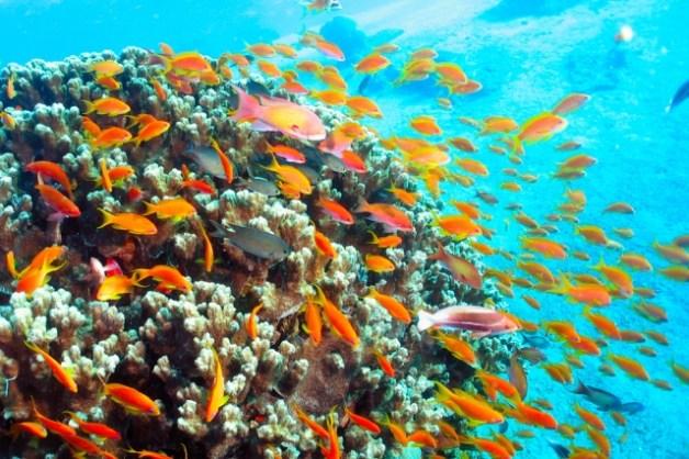 aqaba-scuba-diving-review-