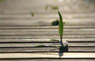 Contenuti evergreen: consigli per renderli longevi (e accattivanti)