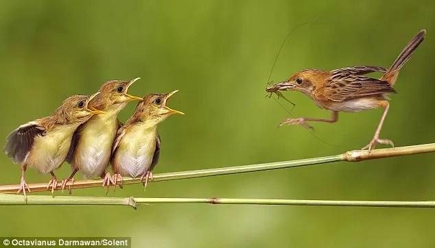 Passarinho, seja ele qual for, foi feito para viver livre na natureza