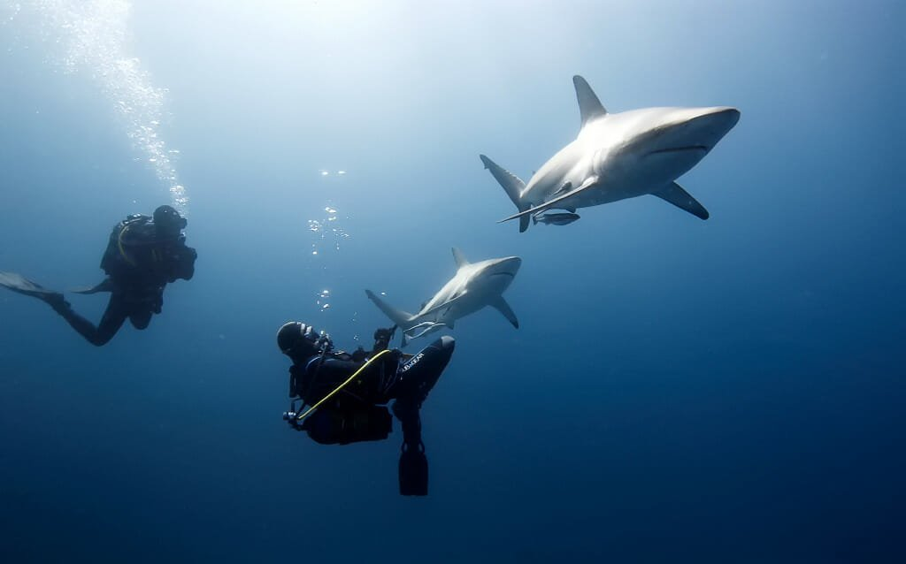 Shark Dive South Africa