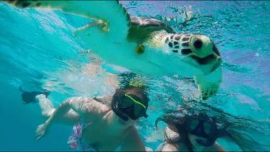 Snorkeling in Curacao | 50ftbelow.com