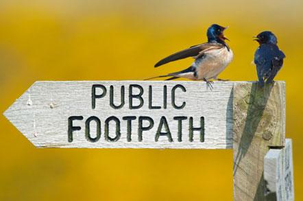 Swallows © Neil Aldridge
