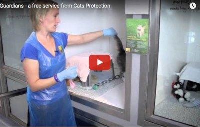 jan leeming and cats protection urging people to sign up for cat guardians