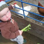 Berkeley's Little Farm, free and fun for all ages