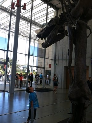 Discover + Go gets you in free to the Cal Academy of Sciences