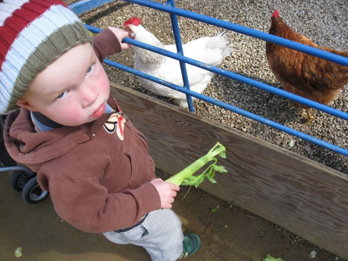 Celery toddler and chicken