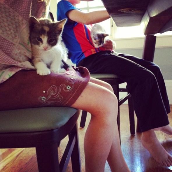 homework-kitties
