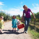 Apple-picking with children near the Bay Area