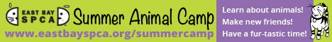 SPCA animal camp