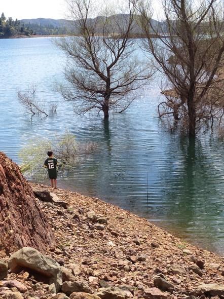 lake shasta shore
