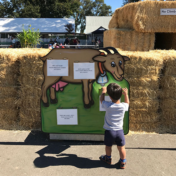 learn about farm animals at g+m pumpkin patch