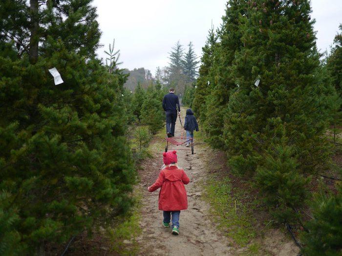 Reindeer Ridge Tree farm