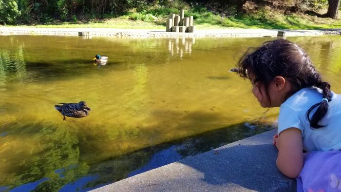 Arlington Park Duck Pond KC