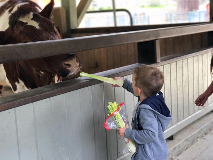feed cows little farm