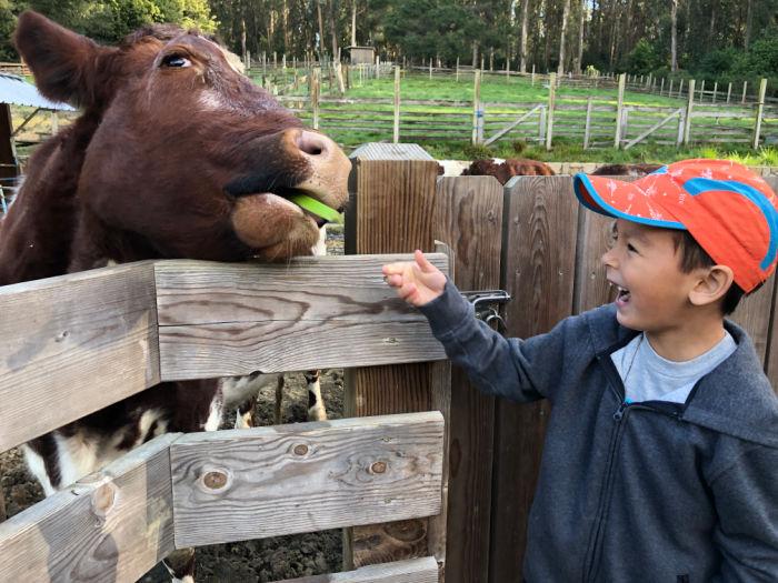 tilden park little farm cow and boy
