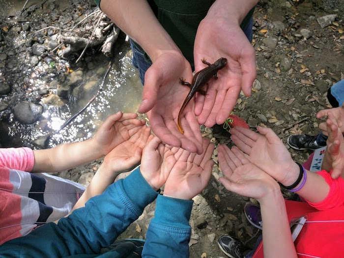 Hands and salamanders