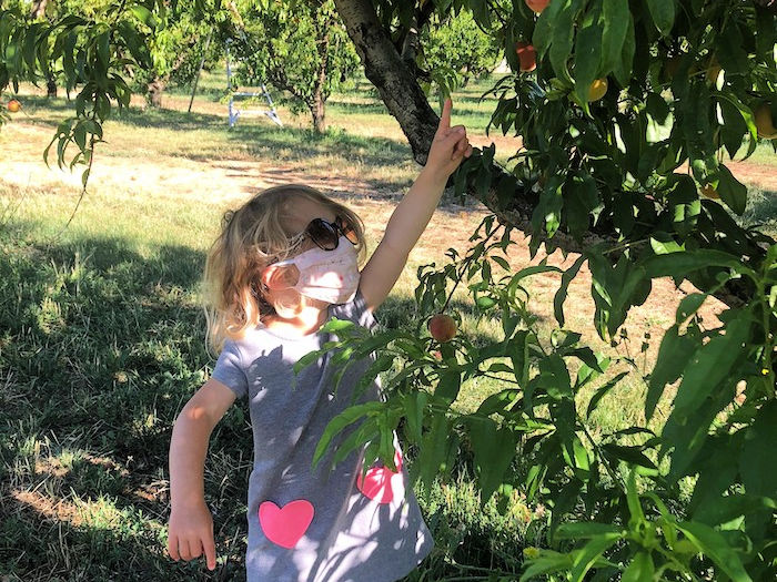 Summer Stone Fruit Picking in the East Bay