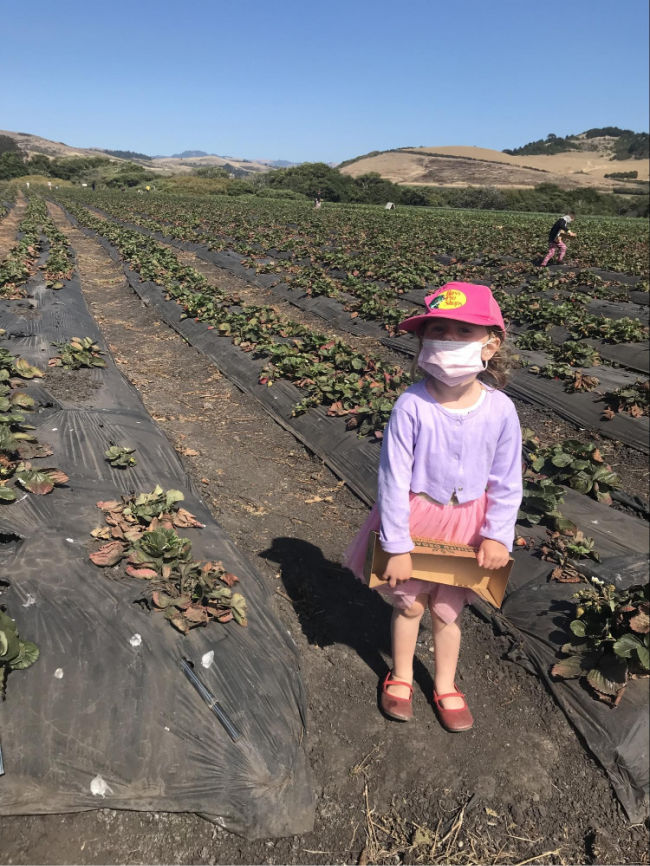 picking berries with kids at blue house farm