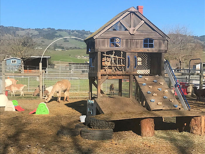 play structure for goats at the farm