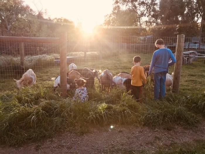 Heirloom Acres Farm Goats