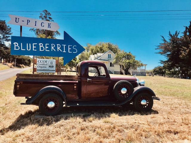 Blueberry Picking Sign Truck