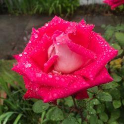 Flower extraordinary