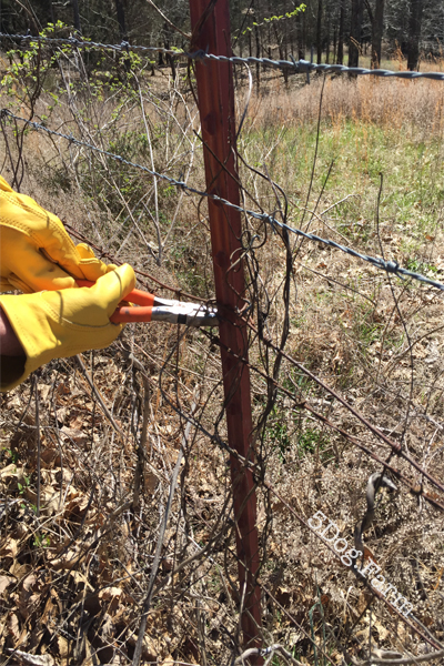 wire cutters clipping barbed wire