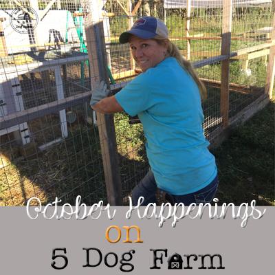 october 2018 update 5 dog farm