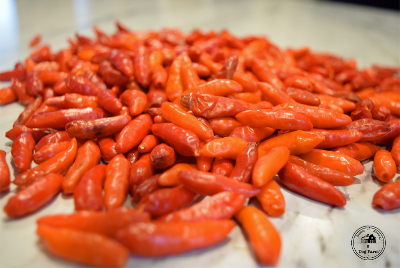 close up of tabasco peppers