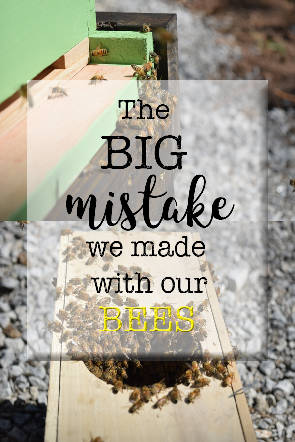 Don't make this mistake with your bees! 5DogFarm