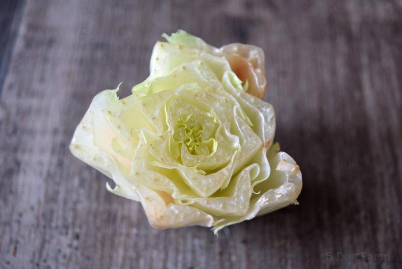 regrow romain lettuce