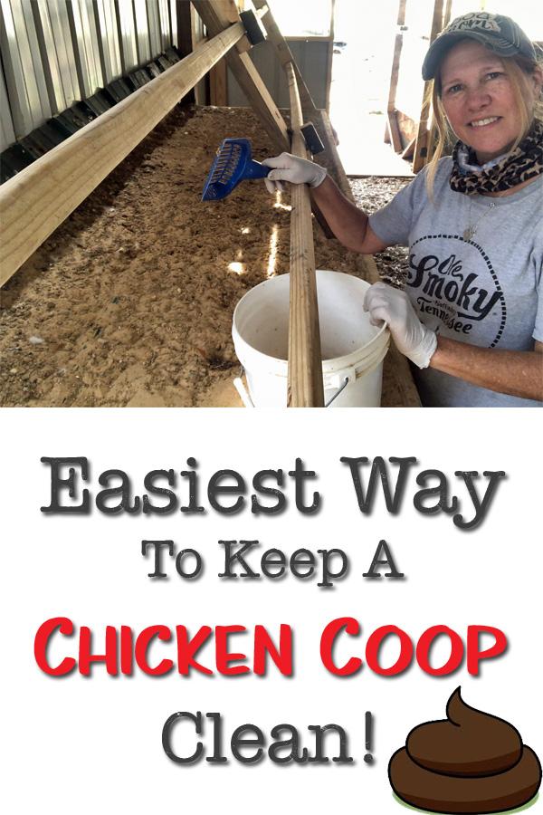 chicken coop pin